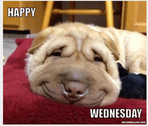 happy wednesday memes funny