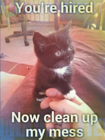 cat hired for clean memes
