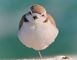 one-leg-birdie