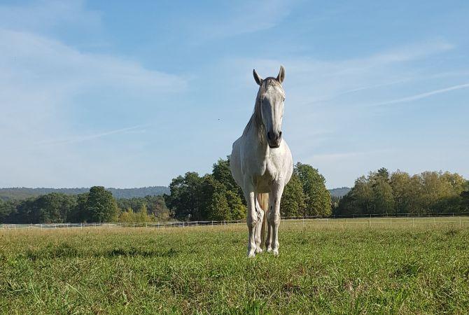 Was ist eigentlich Pferdestärke?