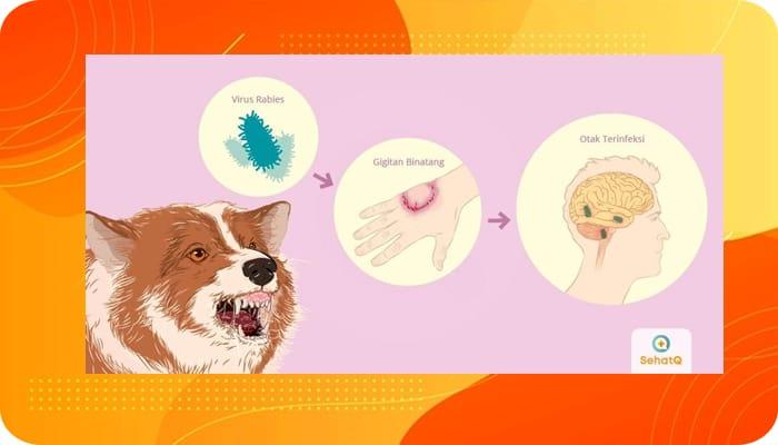 Penyakit Rabies
