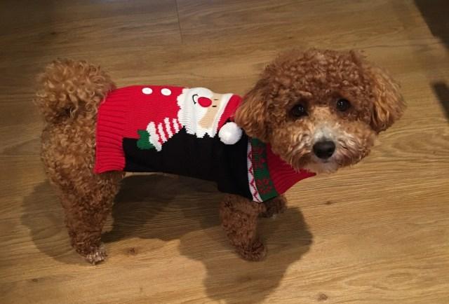 Bodie Christmas Jumper