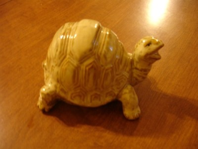 Ray's ceramic turtle