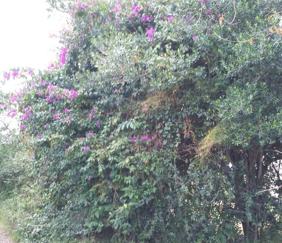 Pretty purple flowers in Kenya