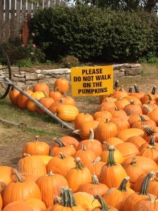 Don't walk on the pumpkins sign