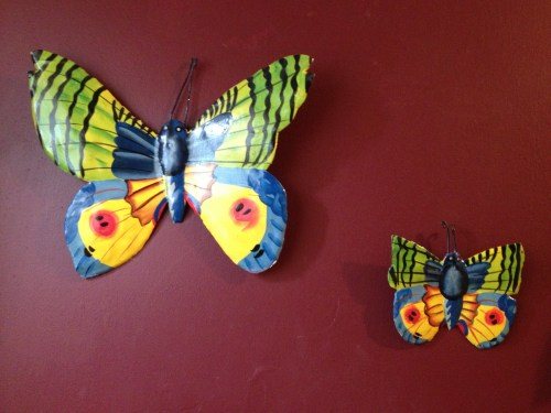 butterflies from Haiti