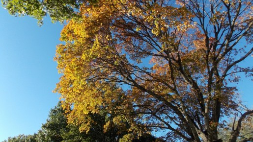 Contrast of green and yellow leaves against blue sky