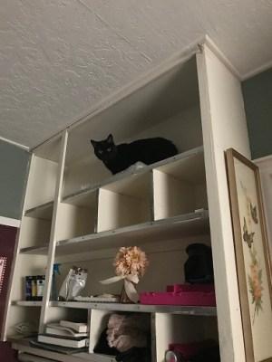 Natalya on top shelf