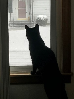 Natalya looking out the window