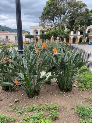 orange flowers, Parque Central