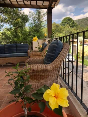 beautiful yellow flowers on terrace
