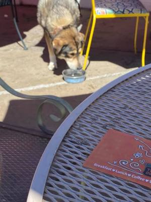 A server brought the dog some water