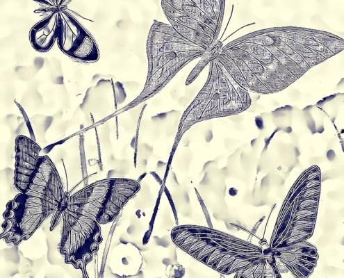 Butterfly Blueprint by Beth Sawickie www.bethsawickie.com/butterfly-blueprint