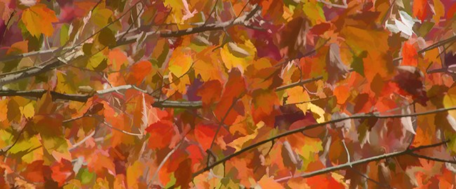 Fall Maple Colors by Beth Sawickie www.bethsawickie.com/fall-maple-colors