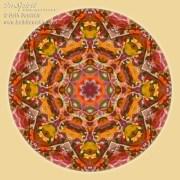 Fall Colors Mandala 2 by Beth Sawickie www.bethsawickie.com/fall-colors-mandala-2