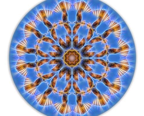 Osprey Energy Mandala by Beth Sawickie
