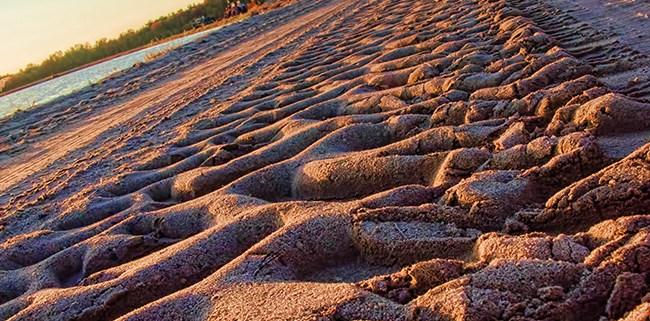Big Green Tracks by Beth Sawickie http://www.bethsawickie.com/big-green-tracks