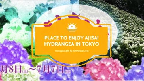 enjoy ajisai hydrangea tokyo