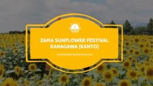 zama sunflower festival kanto copy