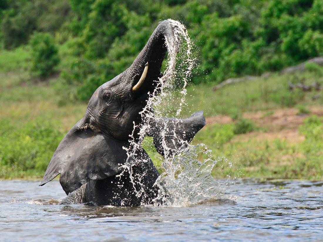 wilde Elefanten bestaunen