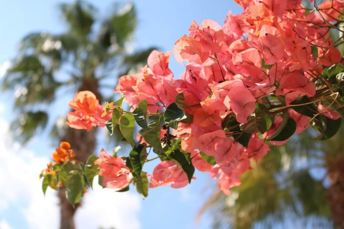 Blütenmeer auf Mallorca