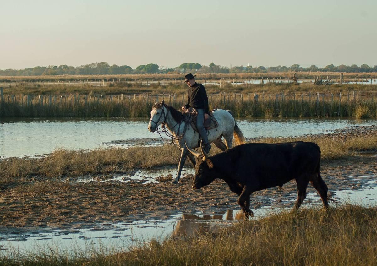 Stierzucht Camargue, Besuch einer Stierfarm