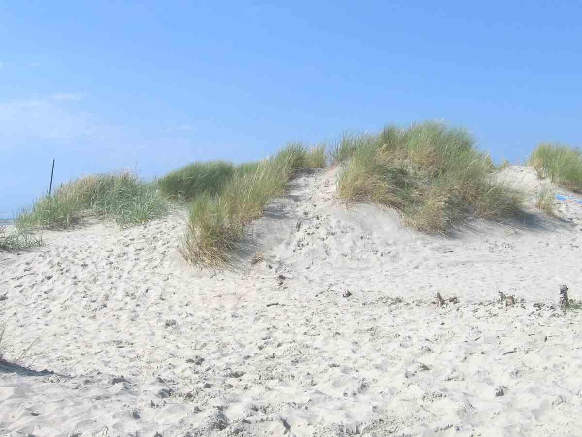 Dünen auf der Nordsee