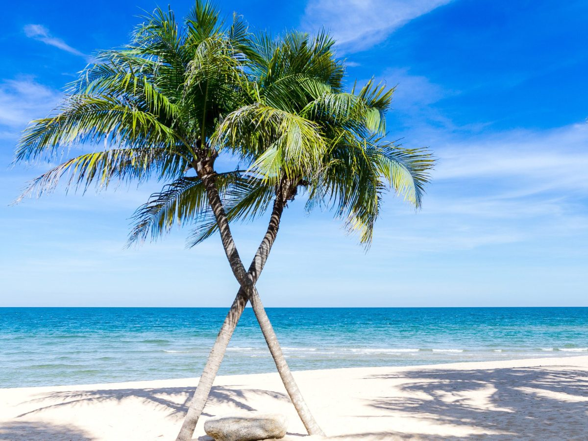 Palmen der Karibik