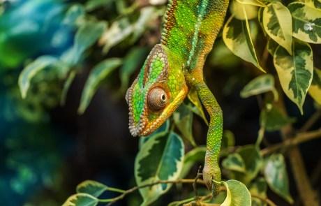 Auch Chamäleons sind im Dschungel keine Seltenheit