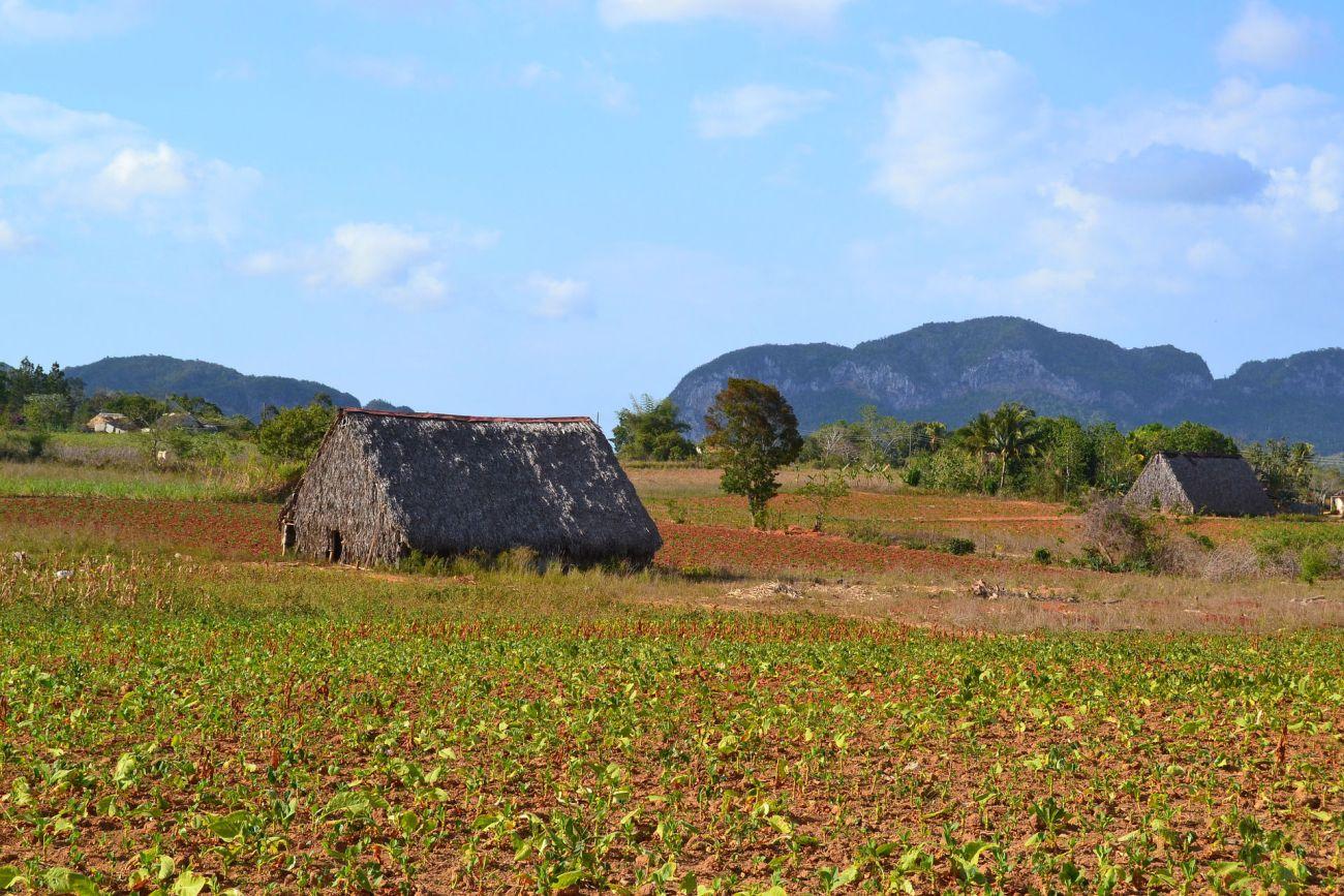 Die grüne Landschaft Kubas