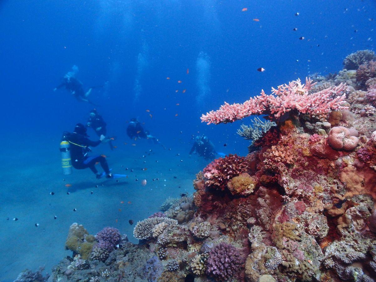 Zu den bunten Korallenriffs in Ägypten tauchen