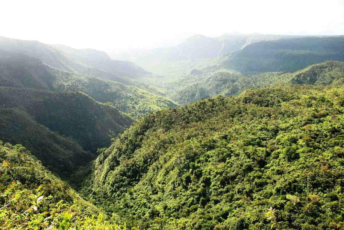 Dichte Wälder, Mauritius