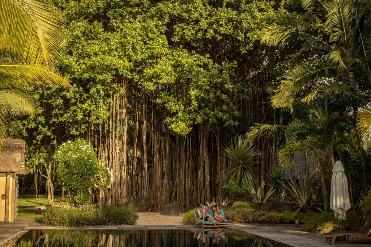 Banyan Tree im Park des Beachcomber Resorts Trou aux Biches