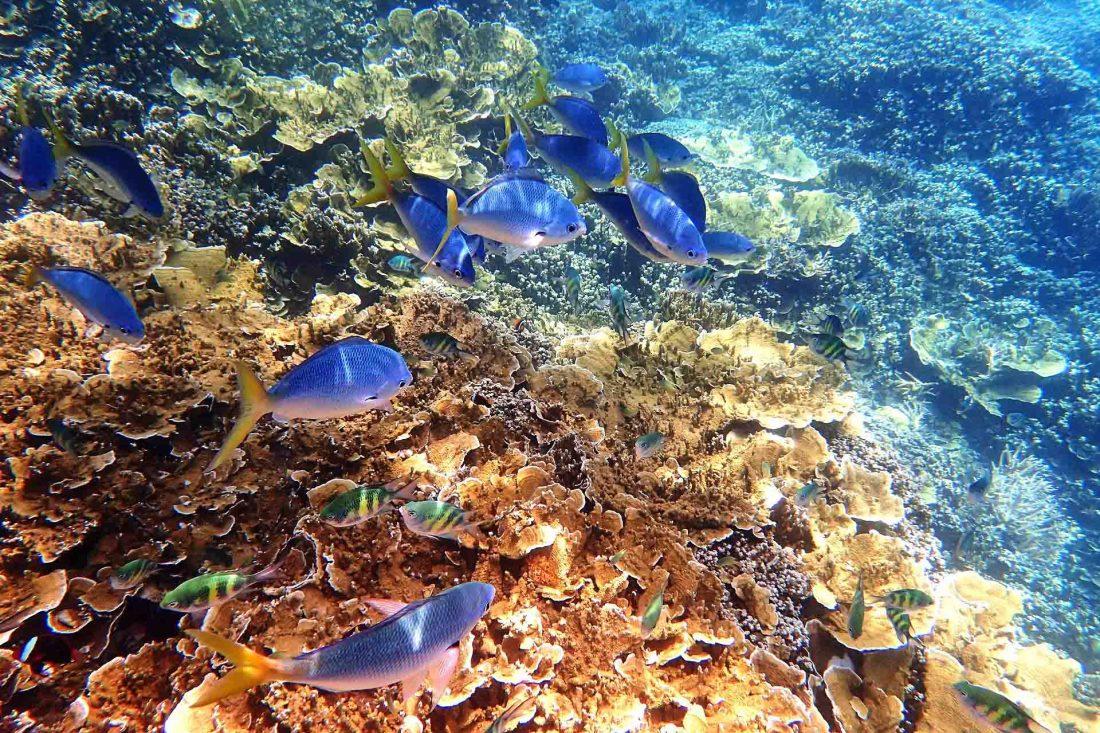 Unterwasserwelt Great Barrier Reef, Australien