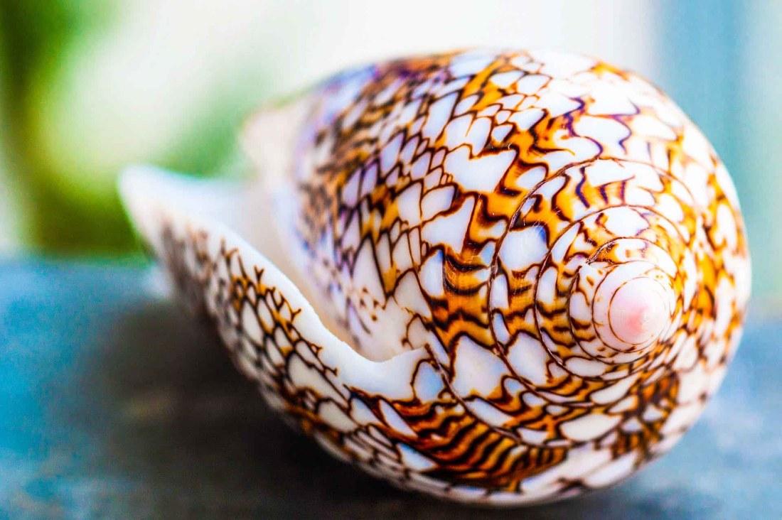 Seychellen, Muschel