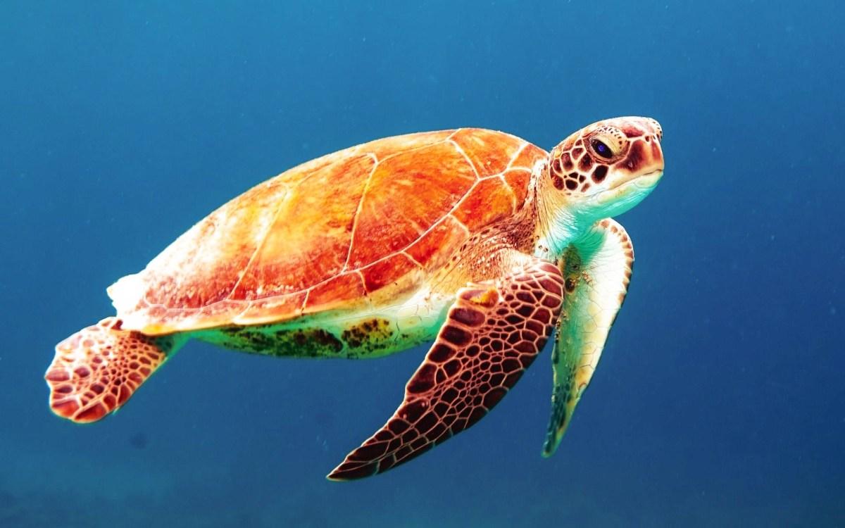 Seychellen, Turtle