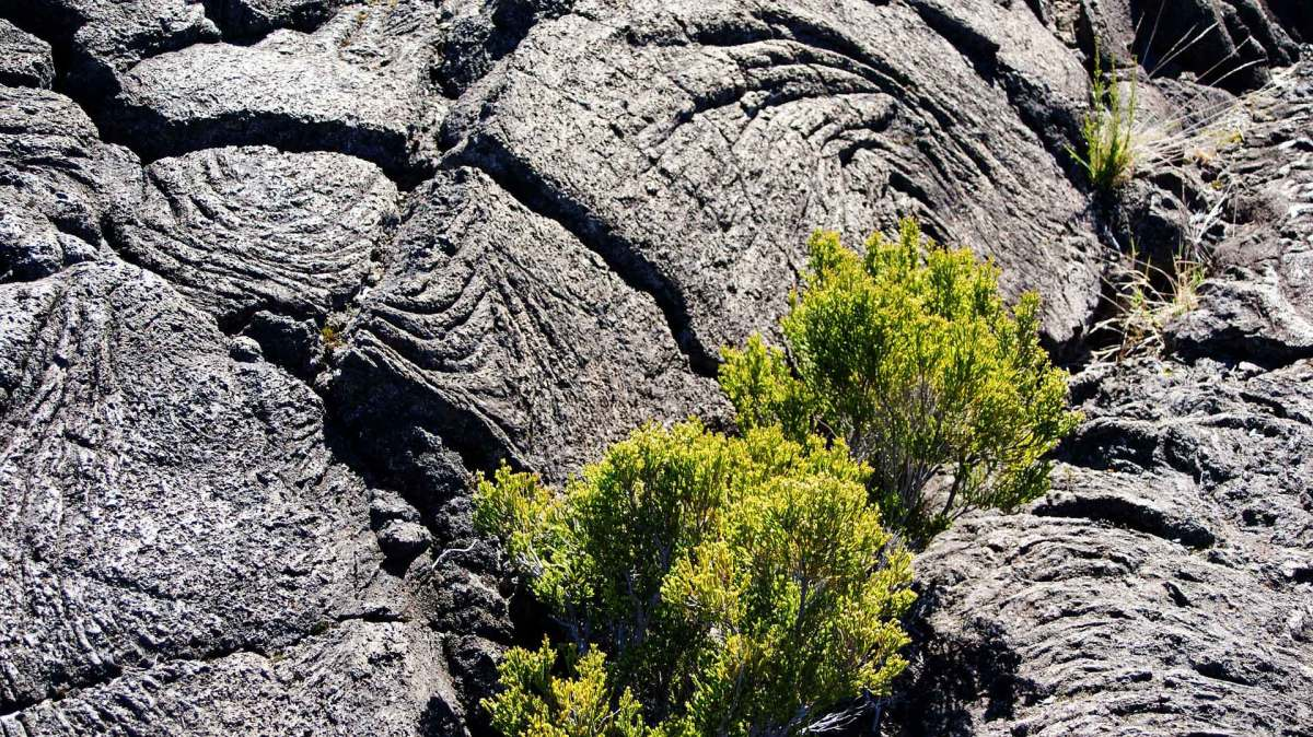 La Reunion Erkalteter Lavastrom