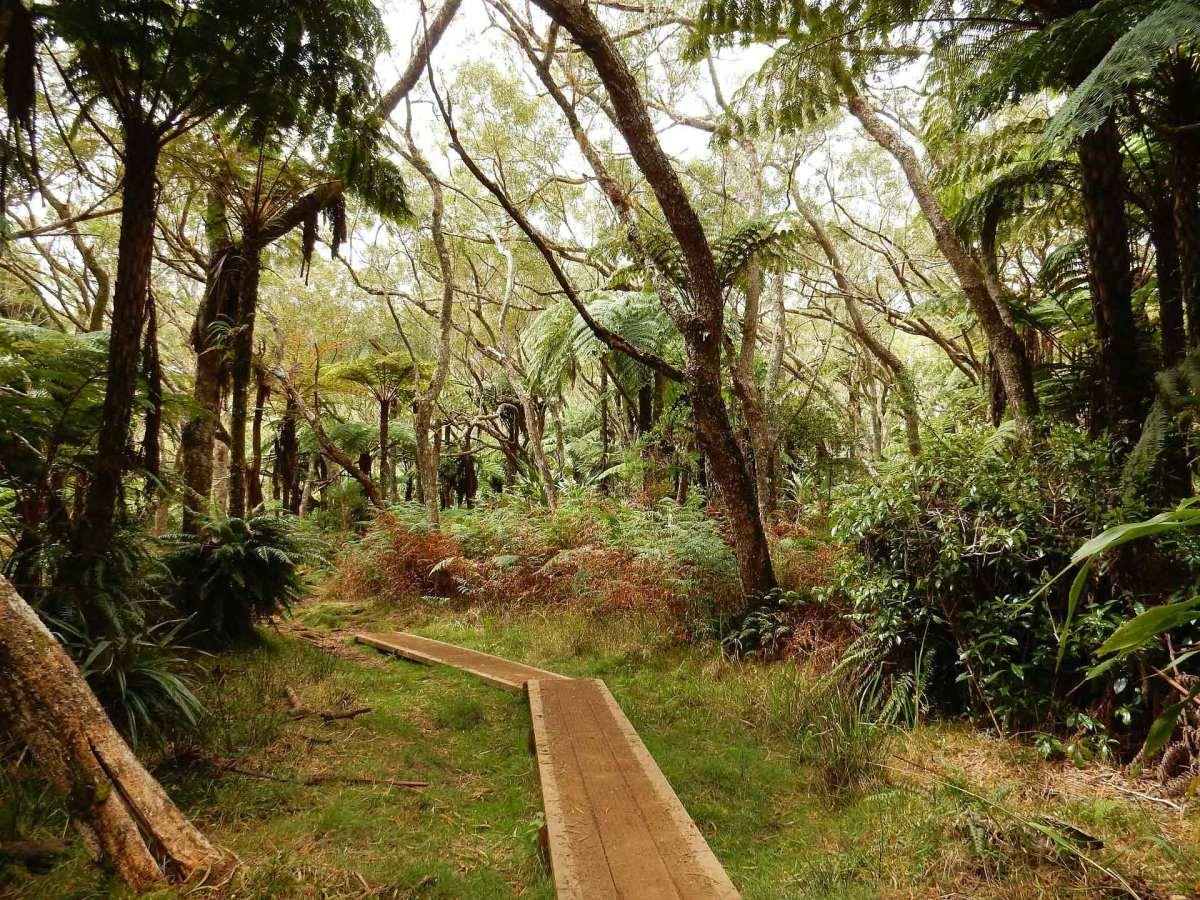 Auf La Réunion warten wunderschöne Trails auf dich