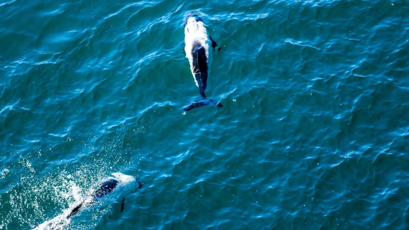 Delfine begleiten unseren Weg