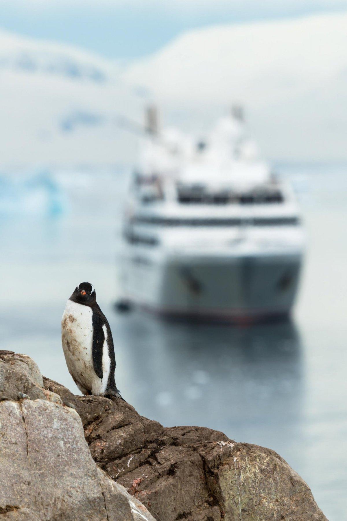 Pinguin. Le Soleal. Antarktis. Neko Harbour