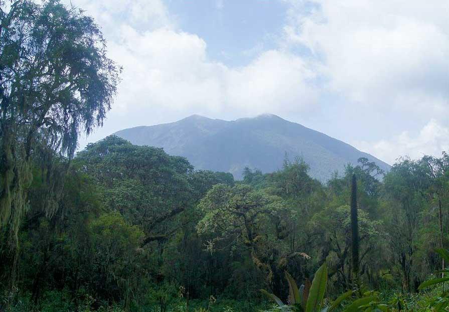 Visoke Vulkan im Grenzgebiet Ugandas