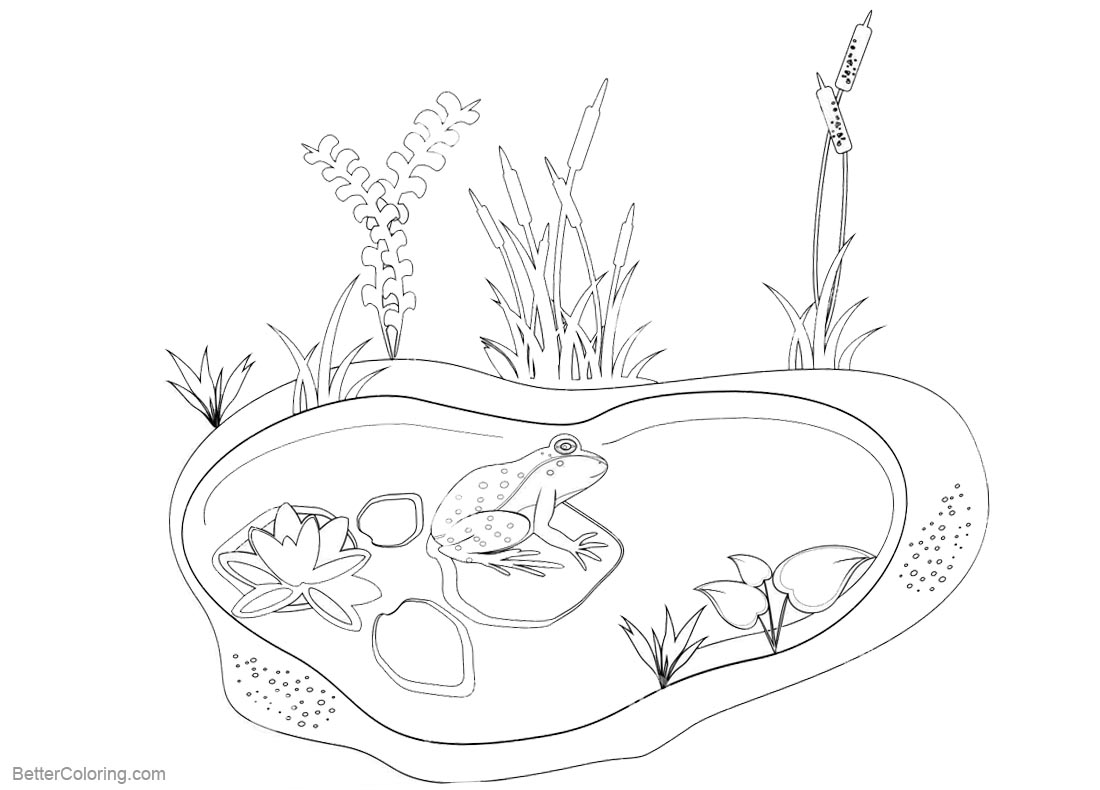 Pond Coloring Pages Animals And Plants