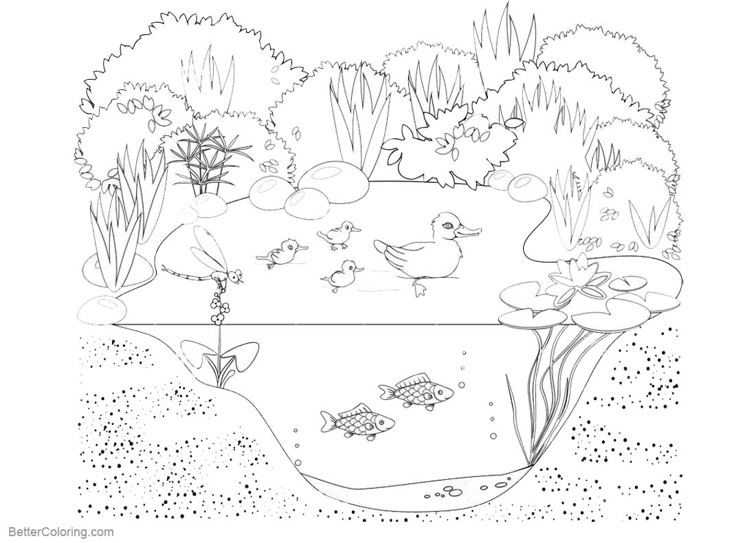Pond Life Coloring Pages Animals And Plants