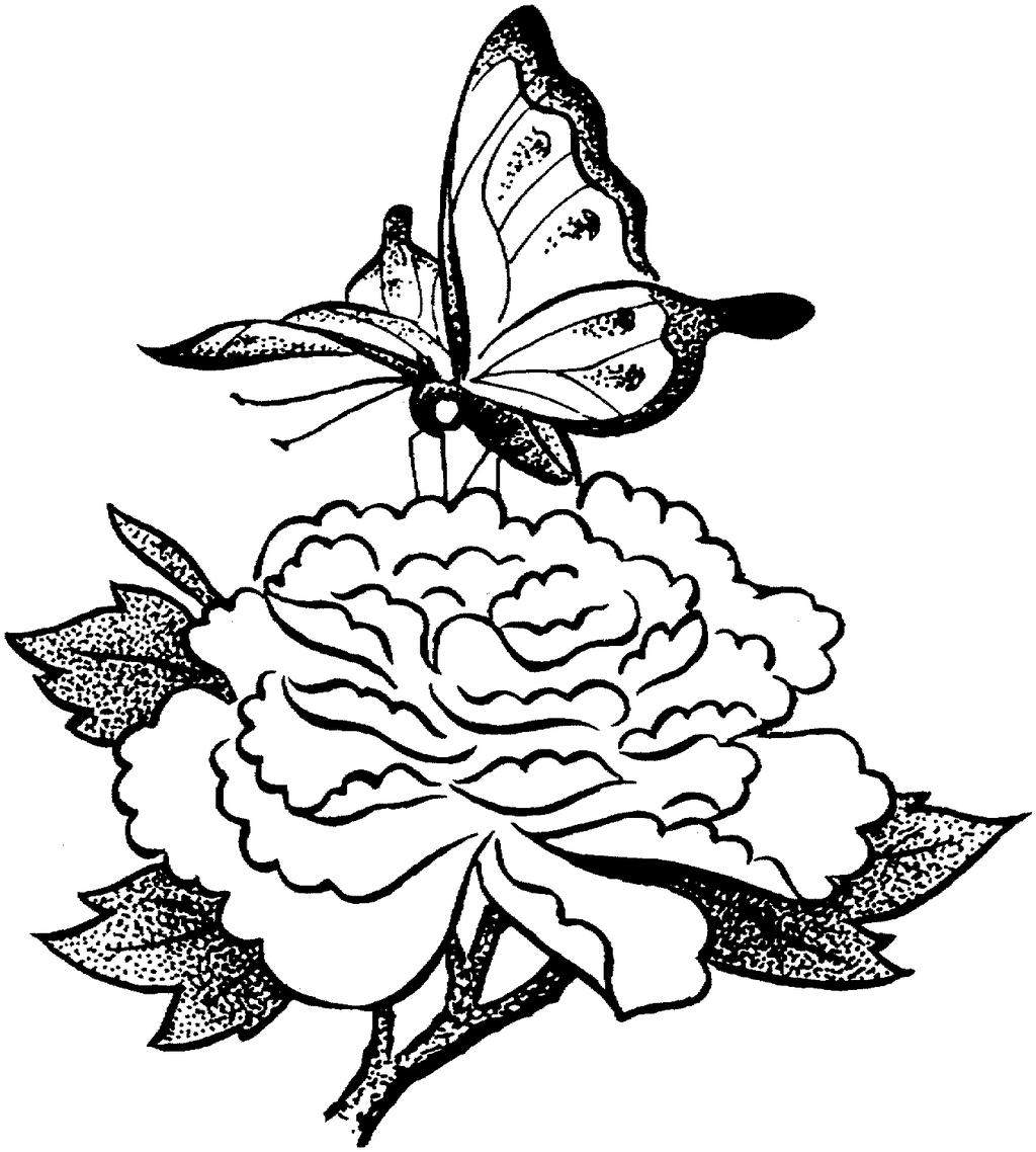 Butterfly And Flower Coloring Pages A Worksheet