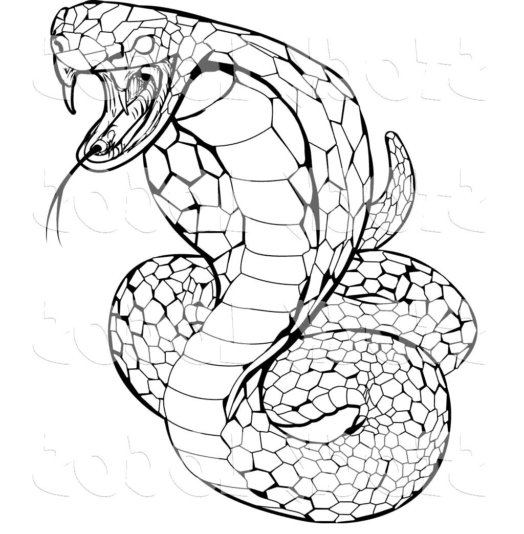 Anaconda Snake Coloring Pages Viper Awesome For Adults