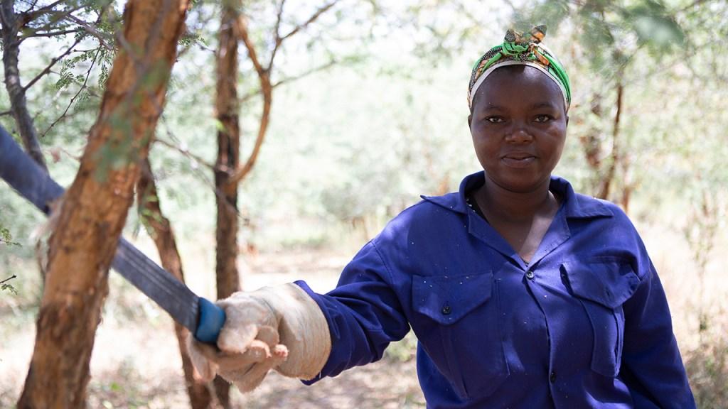 En av arbetarna som sköter Acacia-träden. Juli 2018