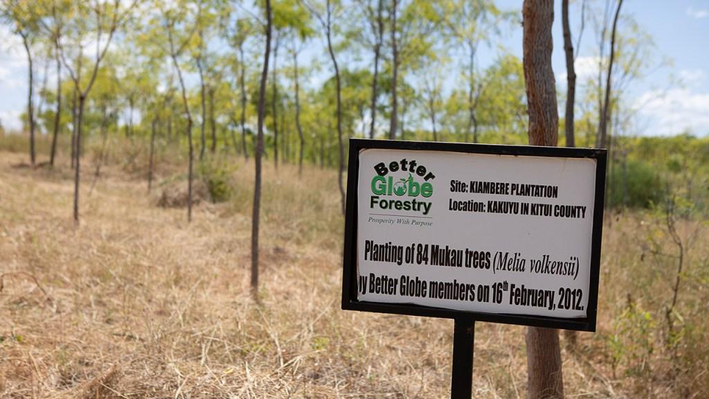 Mukau-träd som planterades av kunderna som besökte Kiambere 2012. Bild från juli 2018.