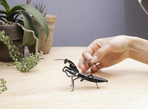 3D Puzzle Dinosaurs and Insects