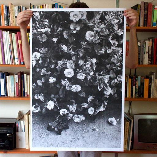 Flowers Poster by Debbie Carlos