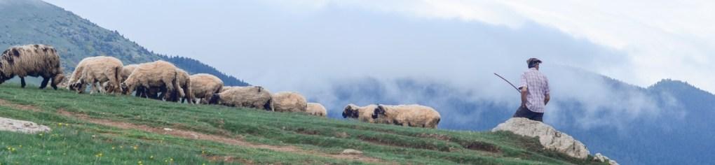 schapenwollen dekbedden